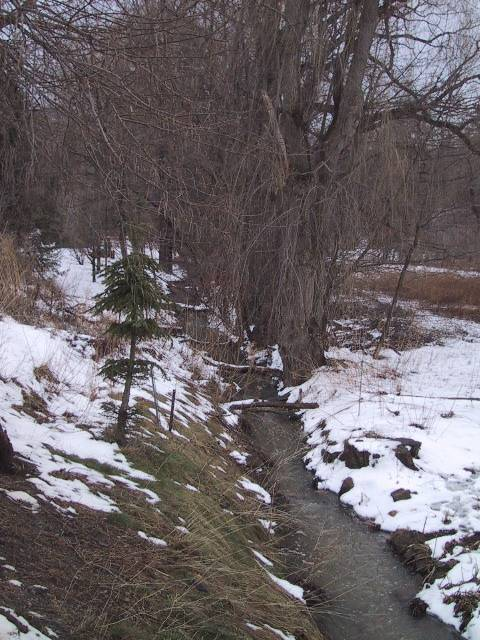 One Mile Creek along Centre Street between Gate and Victoria in March 2004.